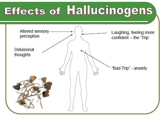 Hallucinogens2